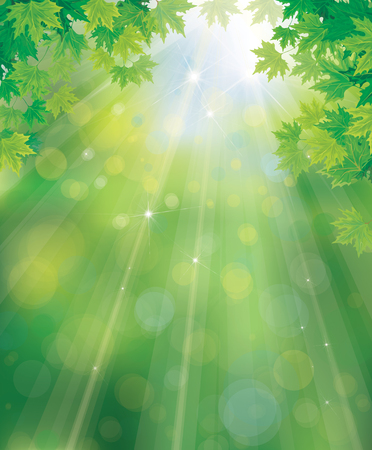 Vector green, spring background with maple leaves border.