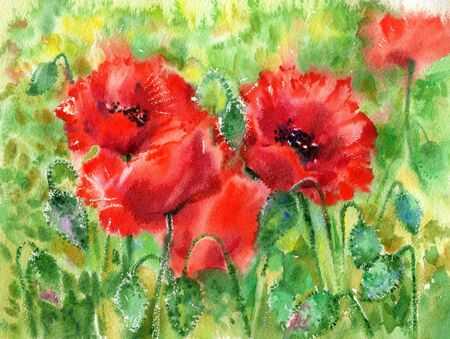 spring bed: Red poppies flowers background, watercolor.