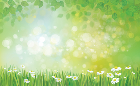 chamomiles: Vector summer background, leaves border and grass with chamomiles.