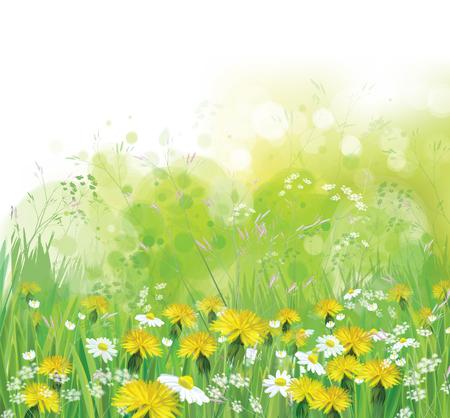 Vector lente, de natuur achtergrond met chamomiles en paardebloemen.