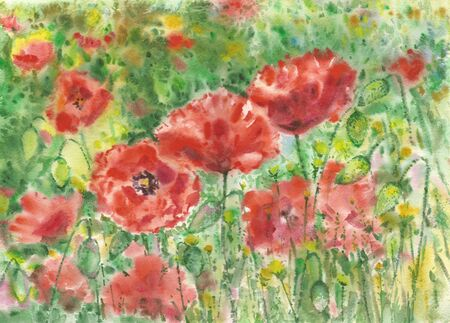 flowerbed: Red poppies flowers background, watercolor.