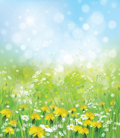 chamomiles: nature background with chamomiles and dandelions.