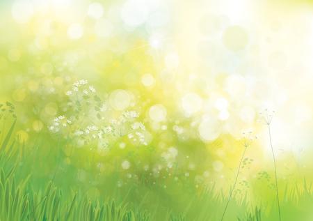groene natuur achtergrond.
