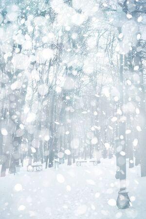 winter park: Winter landscape. Stock Photo