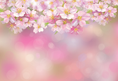 apricot tree: blossoming sakura tree, pink bokeh background. Illustration