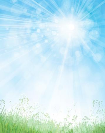 sunshine: Vector green grass  and flowers border on bokeh, blue  background.