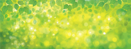 sunshine background: Vector green leaves border on sunshine background.