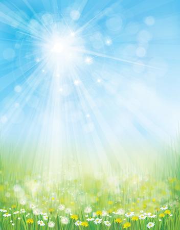 landscape with chamomiles and dandelions on sunshine, blue sky background. Illustration