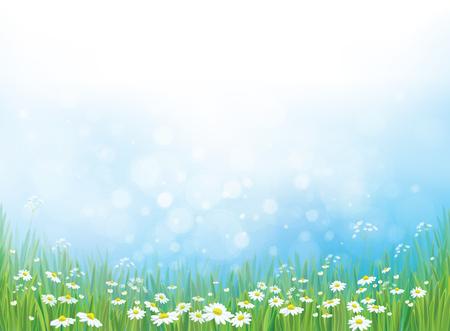 charakter tła, biała stokrotka kwiaty na niebieskim tle bokeh. Ilustracje wektorowe