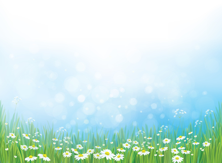 nature background, white daisy flowers on blue bokeh background. Vectores