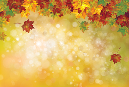 autumnal: autumnal leaves on bokeh background.