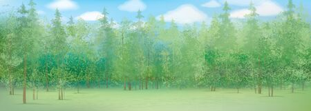 pines: summer landscape with forest background