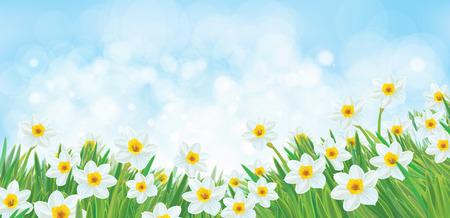 Vector white daffodil flowers on sky bokeh background.