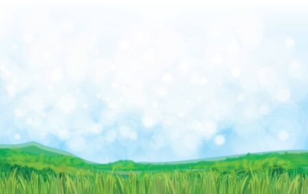 fields  grass: Vector summer nature background.