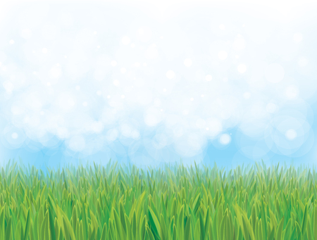 grass and sky: Vector  nature background, blue sky and green grass.