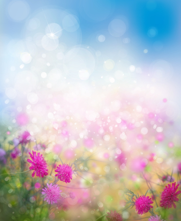 sunshine background: Sunshine, floral, nature background. Stock Photo