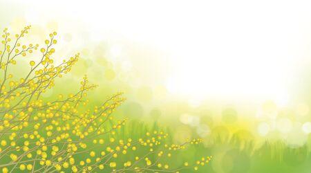 Vector mimosa fiori su sfondo primavera.