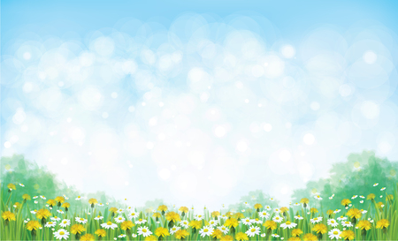 Vector summer nature  background, chamomiles and dandelions field. Çizim