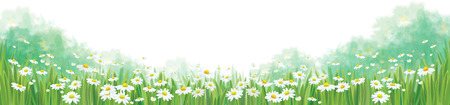 Vector summer nature  background, chamomiles field isolated border.