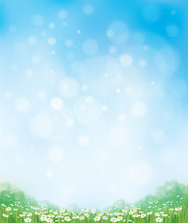 Vector summer nature  background, chamomiles field and  blue sky.
