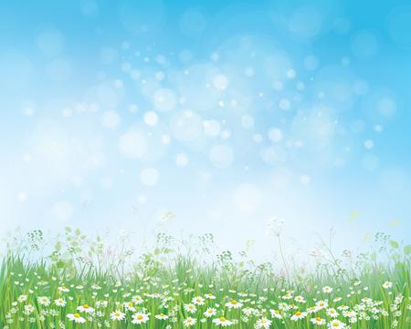 blue summer sky: Vector summer nature  background,  blossoming flowers field on blue sky. Illustration