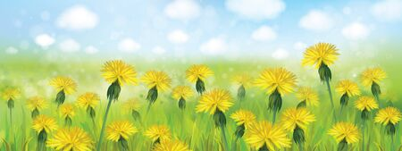 field and sky: Vector spring  nature  background,  blossoming flowers field and  blue sky.