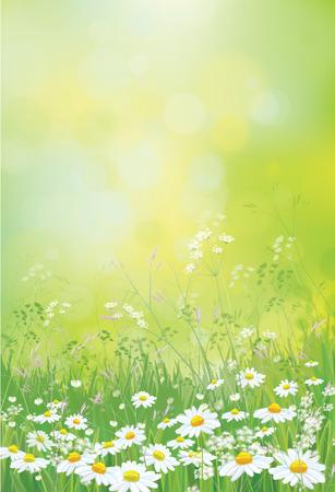 Fondo de la naturaleza del verano del vector, campo de flores de las manzanillas.