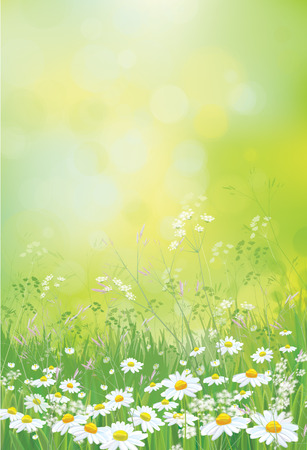 campo de flores: Fondo de la naturaleza del verano del vector, campo de flores de las manzanillas.