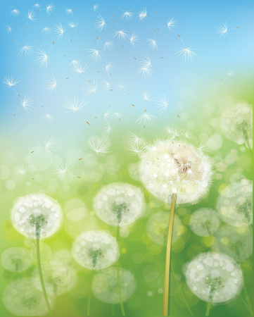 field and sky: Nature  background,  dandelions flowers field and  blue sky. Illustration