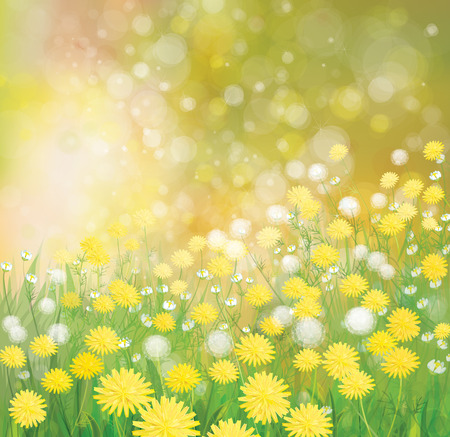campo de flores: Fondo de la naturaleza del vector, campo de flores de los diente de león.