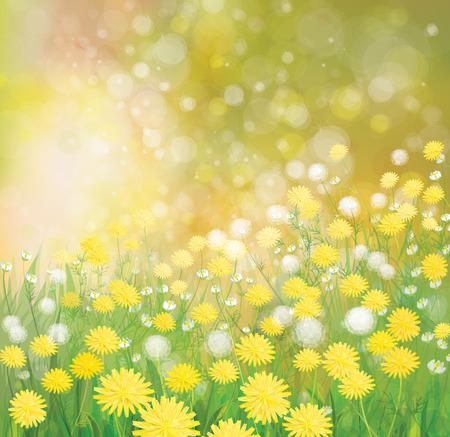 champ de fleurs: Vector  nature  background,  dandelions flowers field.
