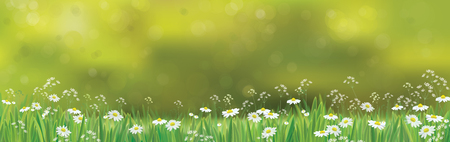 weeds: Creative design of a beautiful Vector  nature  background, chamomiles field.