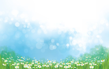 fields  grass: Vector  nature  background, chamomiles field and blue sunny sky. Illustration