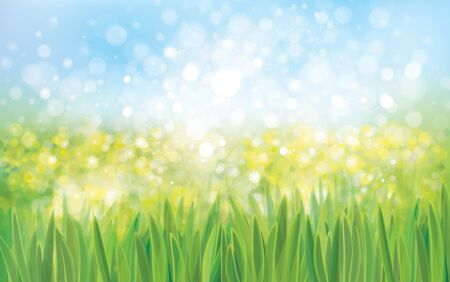 Vector green grass bokeh, nature background. Illustration