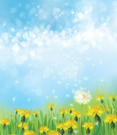 fields  grass: Vector  nature  background,  dandelions flowers field and  blue sky.