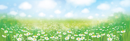 weeds: Vector  nature pattern, chamomiles field and blue sunny sky. Illustration