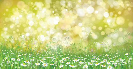 summer nature: Vector summer nature  background,  blossoming flowers field. Illustration