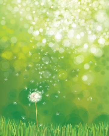 Vector  white  dandelion flower on green nature  background. Ilustracja