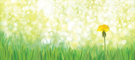 springtime: Vector  yellow  dandelion flower on green nature  background.