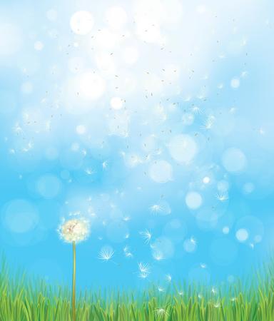 Vector spring  nature  background,  dandelion on blue sky  bokeh background.
