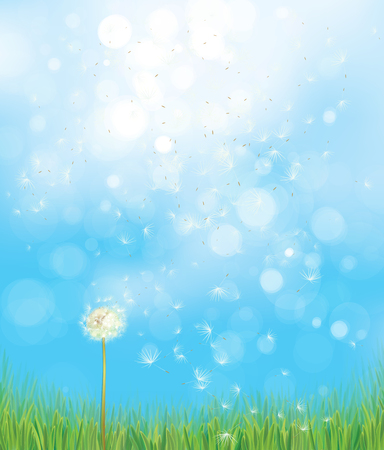 Vector spring  nature  background,  dandelion on blue sky  bokeh background.