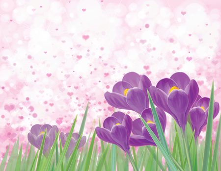 Vector spring  violet crocuse  flowers on pink bokeh  background. Greeting card. Illustration