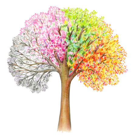 Four seasons.  Tree handdrawing isolated on white. Winter, spring, summer, autumn. Stock Photo