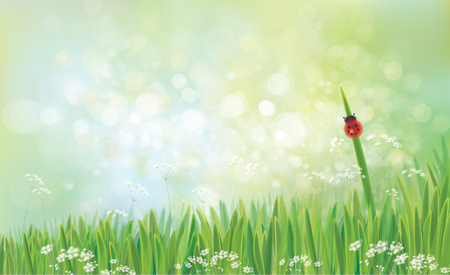 Vector spring  nature  background,  green grass  and  ladybird on green bokeh background.