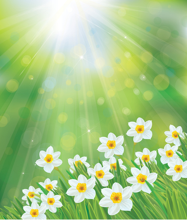 Vector daffodil flowers on spring, green, bokeh  background. Ilustração