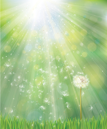Vector of spring background with white dandelion. Archivio Fotografico - 124935454
