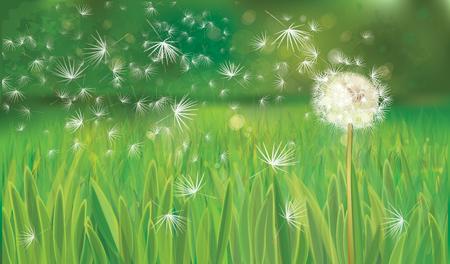 Vector spring background with white dandelion. Ilustração