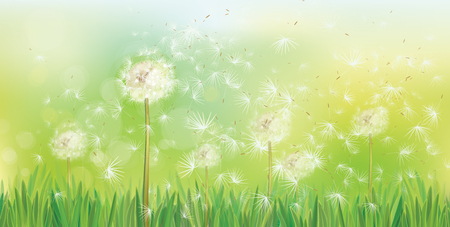 Vector spring background with white dandelions. 向量圖像