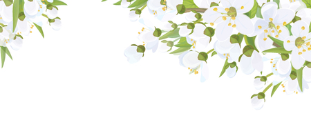 Vector floral  border. White flowers and leaves,  isolated on white. Banco de Imagens - 122614129