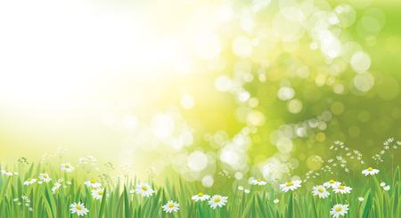 Vector fondo de naturaleza de verano, campo de manzanilla. Ilustración de vector